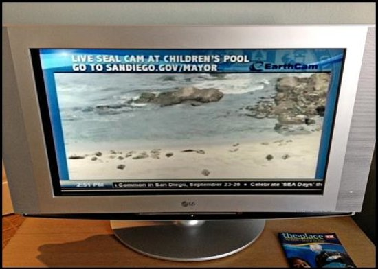 Grande Colonial La Jolla:                   Live Broadcast of the Beach - Seal Cam - Playing on the TV