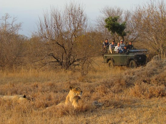 Shindzela Tented Safari Camp: Great animal sightings in open vehicles