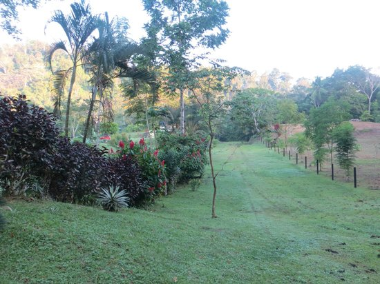 Osa Rainforest Rentals:                   Our backyard at La Casito del Rio