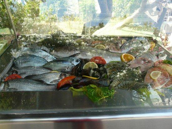 Michalis Studios & Apartments:                                     Poisson frais tous les jours, délicieux