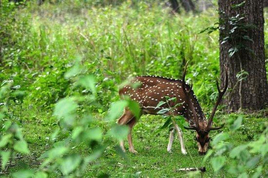 Tamarind Thirunelly:                   Tholpetty Wildlife Sanctuary