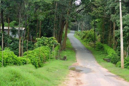 Tamarind Thirunelly:                   Entrance to Nagarhole Wildlife Sanctuary