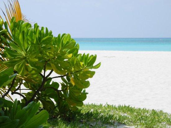 Kanuhura - Maldives:                   Strand
