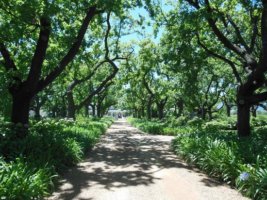 Tea under the Trees:                   Entrance road