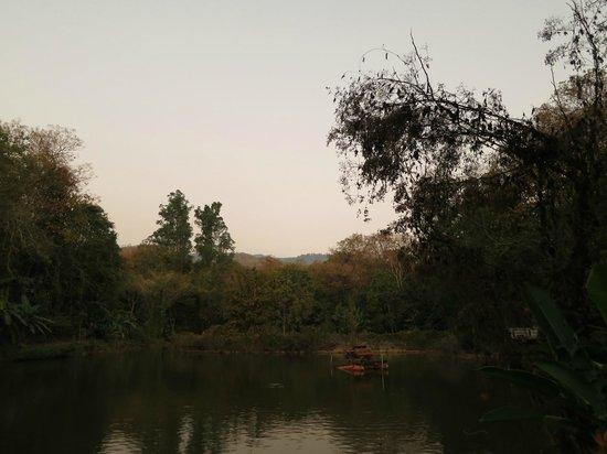 Wat Umong:                   Pond