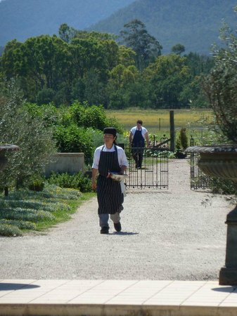 Margan Restaurant:                   Produce fresh from the Kitchen Garden