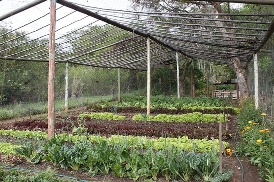 Old Joe's Kaia: Organic Vegetable Garden