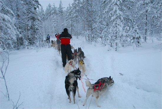 Lapland Safaris - Rovaniemi:                   Splendide sensazioni