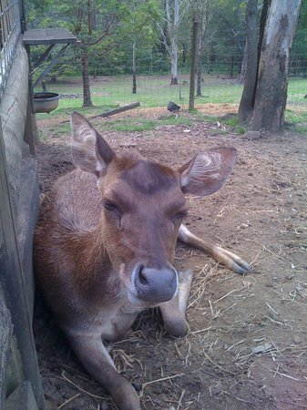 Lyell Deer Sanctuary