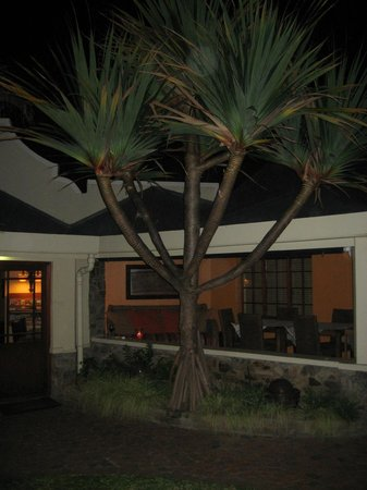 Palms Wilderness Retreat: Palms by night
