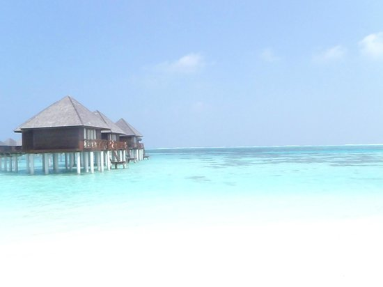 Olhuveli Beach & Spa Maldives:                   океан