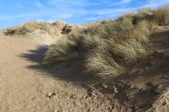 The Gallivant: The wonderful sand dunes opposite the hotel