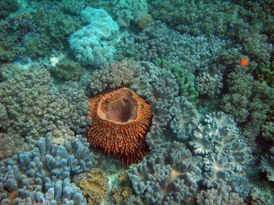 Blue Star Dive & Resort: beim Schnorcheln