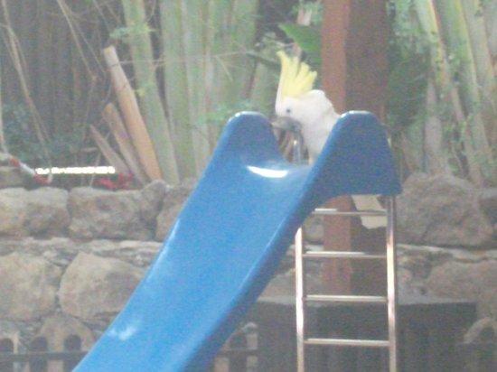 Palmitos Park: Parrot how