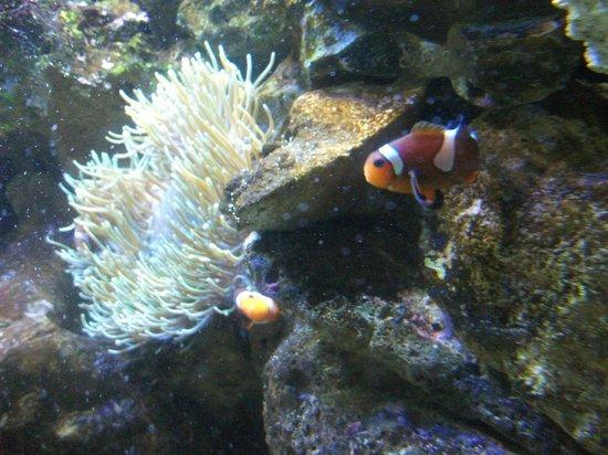 Palmitos Park: Aquarium