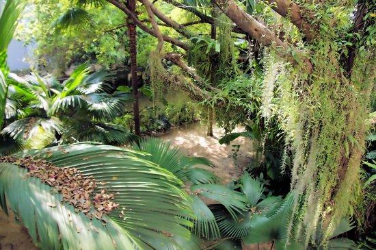 Anantara Riverside Bangkok Resort: Alter Baumbestand im Garten