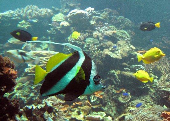 Зоопарк Шёнбрунн: Aquarium