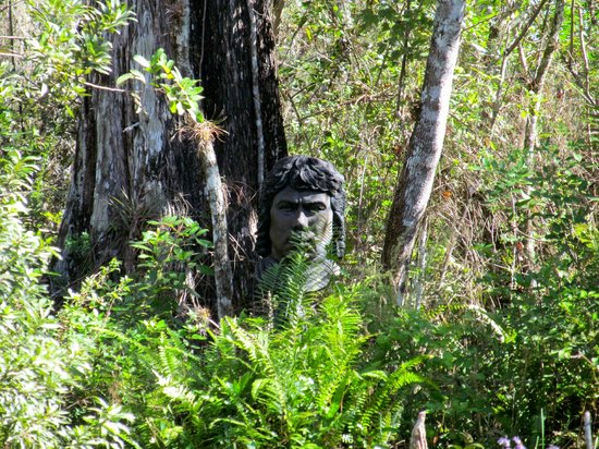 Billie Swamp Safari:                   During the Airboat Ride