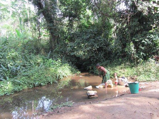 Togo:                                     fôret