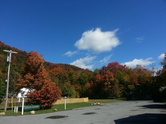Great Pines: Fall Foliage