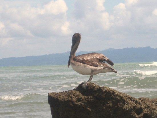 Casa Bambu Resort:                   Pelican with great backdrop