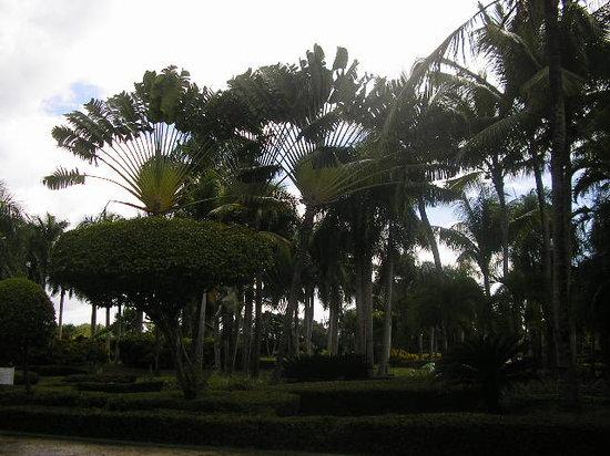 Paradisus Punta Cana:                                                       Lobby gardens