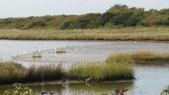Hengistbury Head:                   Watching the birds