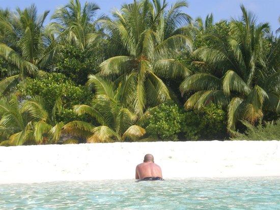 Asdu Sun Island: palme