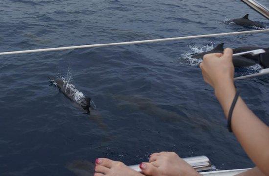 Baros Maldives:                   Dolphin Tour