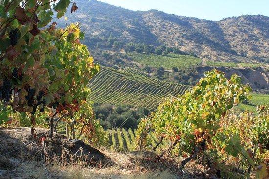 San Vicente de Tagua Tagua, Cile: Tremonte Vineyard
