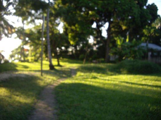 Peace Heritage Inn:                   garden