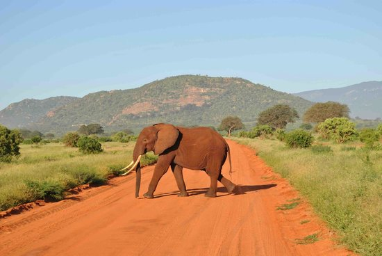 Neslo Tours and Travels Day Tours :                   Tsavo east