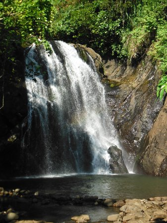 Koro Sun Resort and Rainforest Spa:                   waterfall