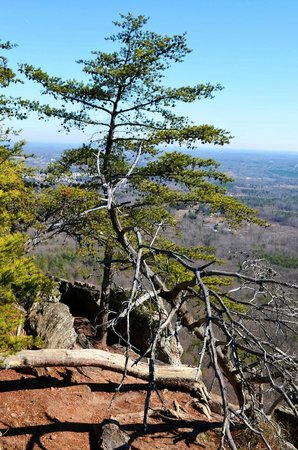 Crowders Mountain State Park: Tree on Crowders Mountain
