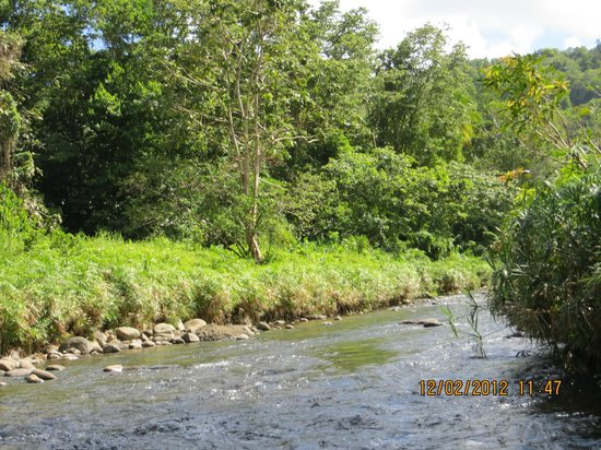 Serenity Lodges Dominica:                   nuture