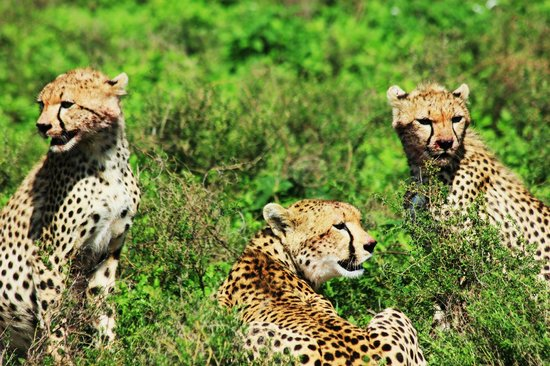 Roy Safaris Ltd. - Day Tours