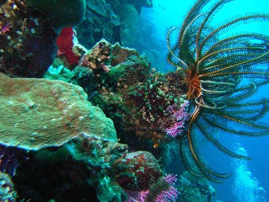 Tasik Ria Resort Manado:                   REEF