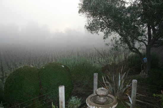 The Wine Country Inn:                   View from Kate's cottage patio - early morning fog on the vineyard