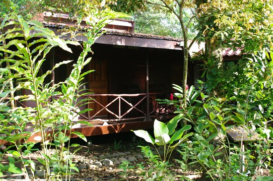 Pachira Lodge:                   Typical cabin