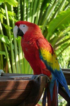 Sandos Caracol Eco Resort:                   Macaw