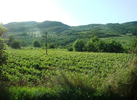 Bacchus : Beautfiful, lush countryside on the drive from Delphi to Olympia