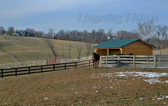 Goose Creek Farm and Winery - Otium Cellars:                   The horses are happy to see you.