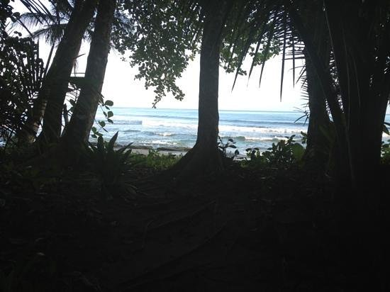 Tree House Lodge:                   path to beach                 