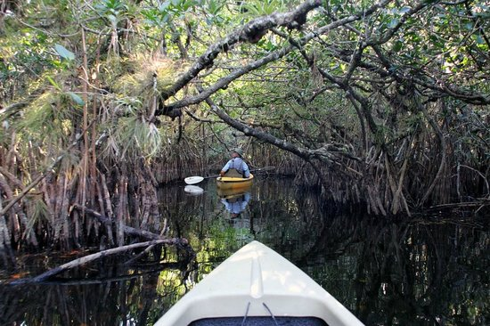 Everglades Area Tours: Mangrove tunnels were such an exciting place to canoe