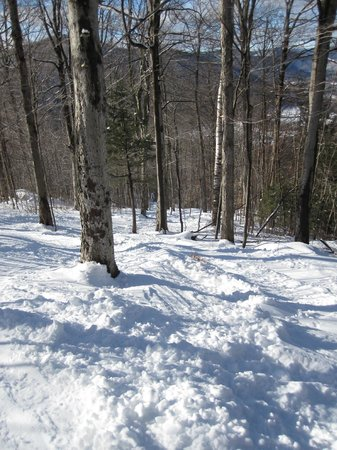 Berkshire East Ski Resort:                   Berkshrie East- one of many tree trails
