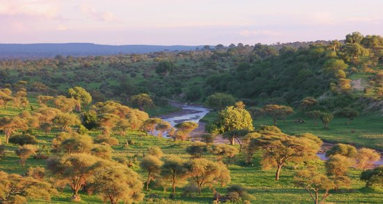 Tarangire Safari Lodge: sun setting over the park, as scene from overlook at Lodge