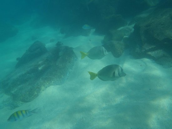 Melia Cabo Real All-Inclusive Beach & Golf Resort: Fish in the Melia Cove - Bring bread in a water bottle to feed