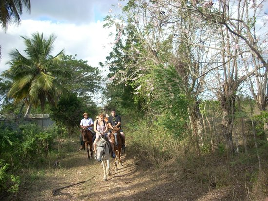 Juan Dolio, Dominicaanse Republiek:                   Riding horses on trail