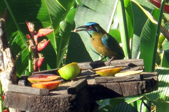 Xandari Resort & Spa:                   Another breakfast bird.