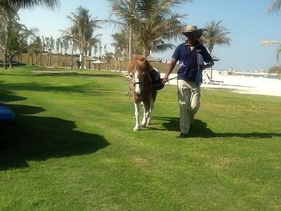 JA Jebel Ali Beach Hotel :                   'Horse riding'